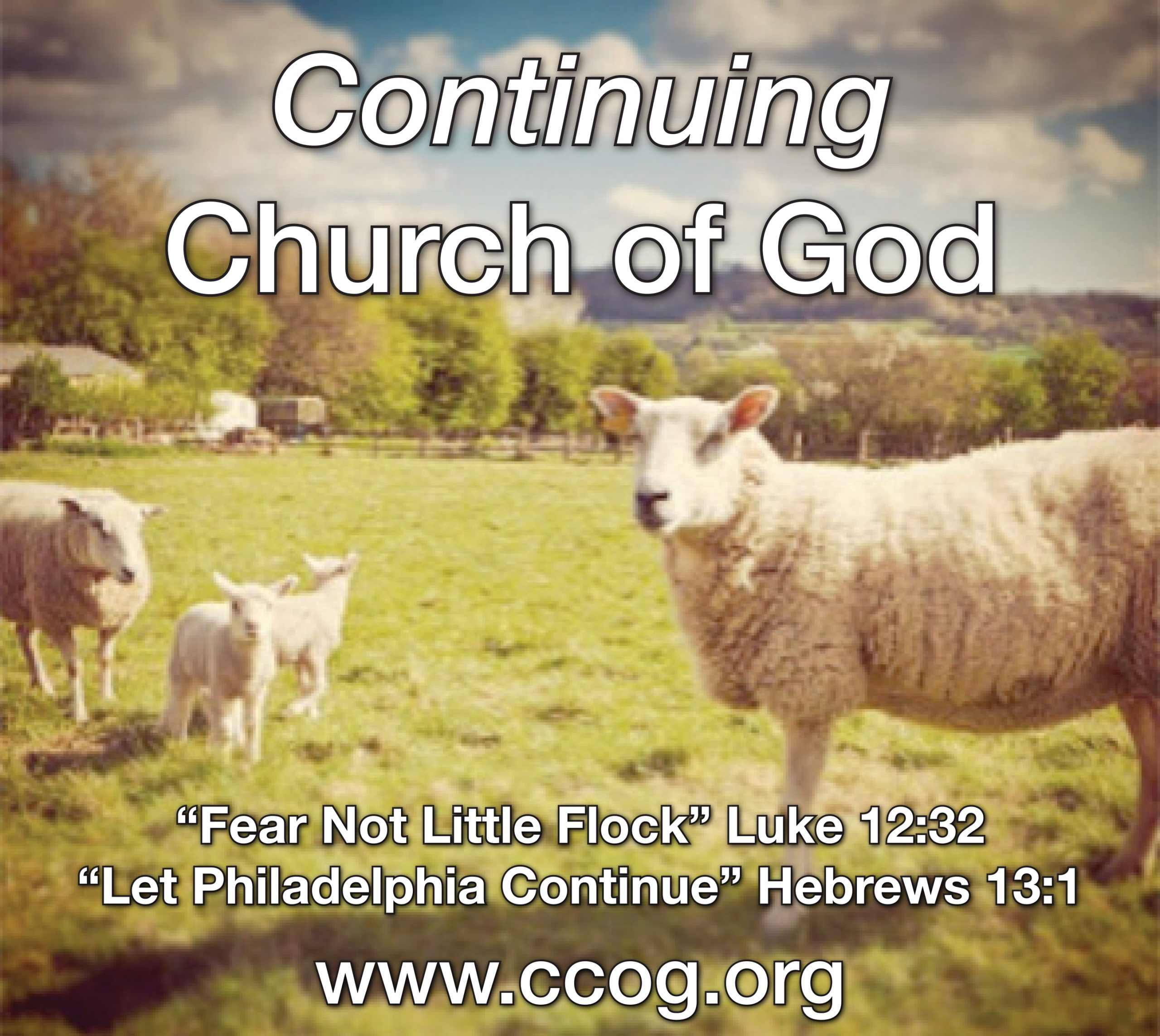 CCOG: It's All About Love